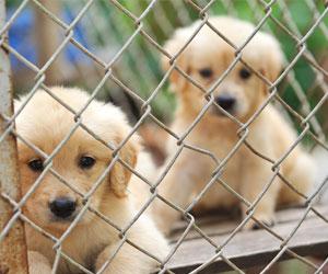 Lo mejor en Refugios de Animales en Houston, TX